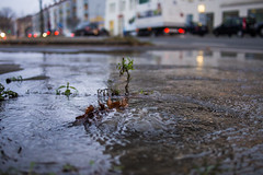 waterworld. (angsthase.) Tags: green cars wet water wednesday germany deutschland wasser bokeh streetlife nrw grn dailylife burst ruhrgebiet dortmund 2012 mittwoch ruhrpott mft wasserrohrbruch micro43 lumixg20f17 olympuspenepl1 epl5 olympuspenepl5