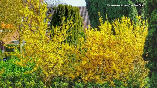 Bethanieplein, Zeist, The Netherlands - 0076