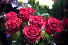 Roses (Génial N) Tags: canada flower rose pentax market quebec montreal jeantalon marché pentaxkr