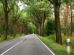 Speed (Batikart) Tags: road street travel trees summer vacation sky holiday tree green nature leaves car speed forest canon germany landscape geotagged outdoors deutschland freedom evening vanishingpoint leaf nationalpark alley flora europa europe grove sommer urlaub natur tranquility august row rows journey relaxation avenue ursula landschaft variation 2012 2010 allee a610 sander mecklenburgvorpommern mritz waren mecklenburgwesternpomerania canonpowershota610 viewonblack on mritznationalpark move batikart delineatorpost 201310 centrelineofaroad