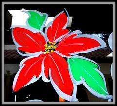 Poinsettia Window Painting Design (Ria B ~ M Burgess) Tags: christmas holiday art glass painting design artist poinsettia decoration designs technique windowpainting holidayart windowsplash