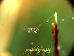 JEWELS AFTER THE STORM (jmaphotography) Tags: storm water dew jewels waterdroplets