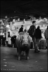Porcine Icon (jbhthescots) Tags: seattle pikeplacemarket leicam4 xtol1112min 50mmsummiluxv2 aristaeduultra320 leitzyellowfilter