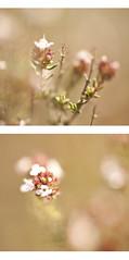 Pintando a 1.8 (Vte.Moncho) Tags: flowers flores photoshop painting paint bokeh pastel desenfoque filtro tonos