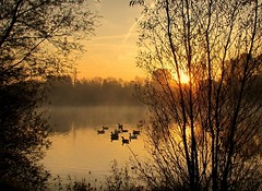 golden morning (Foto Dominic) Tags: trees light sunlight mist fog sunrise nevel ngc gooses vijver zonsopgang frameit mygearandme mygearandmepremium mygearandmebronze mygearandmesilver mygearandmegold mygearandmeplatinum mygearandmediamond fotodominic rememberthatmomentlevel4 rememberthatmomentlevel1 rememberthatmomentlevel2 rememberthatmomentlevel3 rememberthatmomentlevel5 rememberthatmomentlevel6 vigilantphotographersunite vpu2 vpu3 vpu4 vpu5 vpu6 vpu7