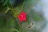wish upon a star (Jaayelle ✿) Tags: light red sky flower green canon garden star bokeh shallowdof artistictreasurechest