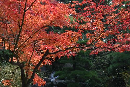 日本庭園-晩秋