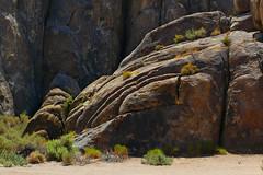 Curves and Shadows (lefeber) Tags: california plants mountains backlight landscape rocks shadows desert roadtrip brush erosion boulders plus grasses cracks bushes rockformations owensvalley sierranevadamountains alabamahills