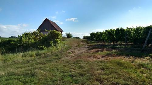 Weinbergshäuschen bei Mommenheim