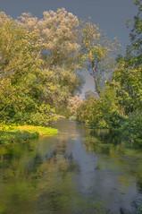 Superb Silver Birch (1 of 1) (Geoffrey Radcliffe /radcliffegeoffrey@yahoo.co.uk) Tags: geoffrey radcliffe river test hampshire england uk