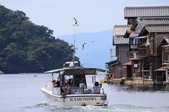 Short voyage around the harbor (Teruhide Tomori) Tags: ine tango harbor kyoto japan 伊根 丹後半島 京都 日本 ボート boat voyage 遊覧船 舟屋 かもめ 航海 seagull sea gull