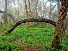 Florida; The Land that Time Forgot (realfloridaphoto) Tags: florida palm island mount dora ricoh gxr 28mm subtropical wilderness landscape