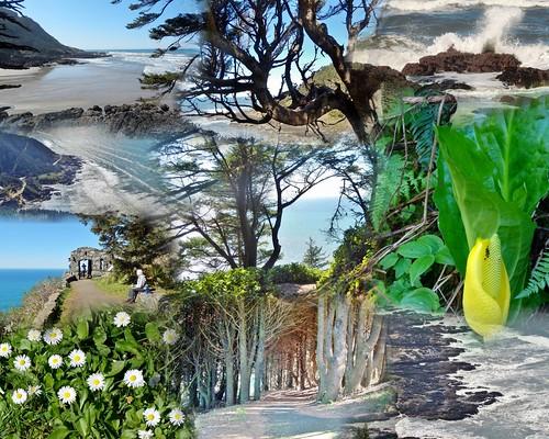 CAPE PERPETUA SCENIC AREA Collage