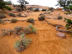 Mesa Arch Trail, Canyonlands, Utah (travelourplanet.com) Tags: mesaarch mesaarchtrail canyonlands overlook canyonlandsnationalpark utah islandinthesky