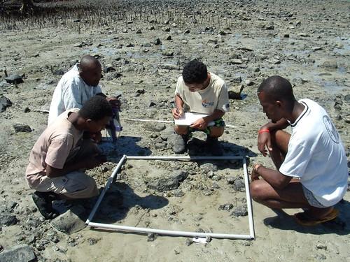 seagrass survey 1