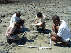 seagrass survey 1 (Dugong Seagrass) Tags: madagascar c3 seagrass