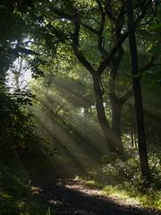 Howe Park Wood (ukstormchaser (A.k.a The Bug Whisperer)) Tags: howe park wood tattenhoe uk wildlife nature sun sunlight sunshine morning rays milton keynes sssi broadleaf august summer leaf leaves woods woodland