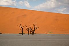 Deadvlei Morning, Namibia (ynaka29) Tags: namibia deadvlei safari sossusvlei desert dune wildernesssafaris sand tree littlekulala