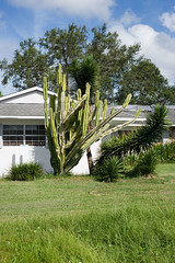 Overgrown (reyherphoto) Tags: art photography exploration sunny outdoors cactus plants house home florida suburban green blue clouds sky
