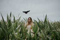 Landing (hollyrosestones) Tags: select crow landing corn field composite self portrait