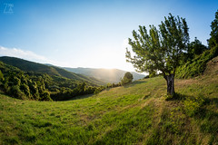 Light Slope (Zano91) Tags: grass sky distorted nikon d7100 samyang 8mm f35 fisheye mood moody colors color green blue lightblue grey colorful spring morning trees outdoor rim circle round tree shadows light sun ray nature sides clouds leaves illuminated plant mountain hill hills
