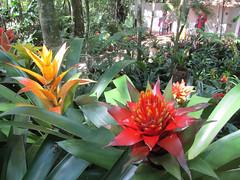 "Le Parc des Oiseaux d'Iguaçu <a style=""margin-left:10px; font-size:0.8em;"" href=""http://www.flickr.com/photos/127723101@N04/29642143775/"" target=""_blank"">@flickr</a>"
