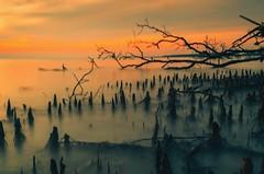 We need supporter (azharii___) Tags: pantaikelanang sunset seascape ocean landscape longexposure slowshutter d3200 nikon malaysialandscape landscapemalaysia goldenhour laandscapephotography