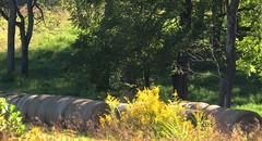morning sun...... (Hayseed52) Tags: round hay nature outdoors bales roundbales trees sunlight morninglight shadows shade