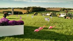 Alice in Wonderland croquet (c_neuhaus) Tags: croquet aliceinwonderland flamingolawnornaments
