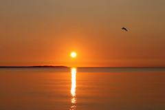 Minimalistic sunset beauty (Ingrid0804) Tags: minimalisticsunset denmark odsherred kattegat roervig