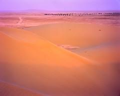 Dune Face Glow (Doha Sam) Tags: 100 4x5 analogue chrome crowngraphic desert dunes e6 epsonv700 film fuji largeformat linearscan manualfocus pacemakercrowngraphic piccure positive qatar rawtherapee samagnew sand scan southerndesert summer velvia wilderness iso100 smashandgrabphotocom wwwsamagnewcom