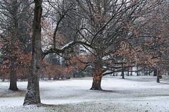First Snowfall in the Arboretum (Rob Huntley Photography - Ottawa, Ontario, Canada) Tags: trees winter snow ontario photography ottawa arboretum snowfall experimentalfarm huntley firstsnowfall centralexperimentalfarm robhuntley robhuntleyphotography