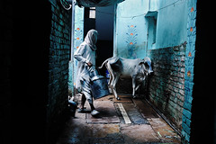 Holy cow (Giannis Papanikos1) Tags: india house man cow nikon asia holy varanasi gsp pradesh uttar giannis d700 flickraward  papanikos