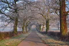 Frosty Lane (AndyorDij) Tags: fields field hoarfrost frost lyndon lyndonhill hedgerow misty mist rutland uk trees andrewdejardin