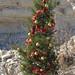 2012_Loop_360_Trees_240