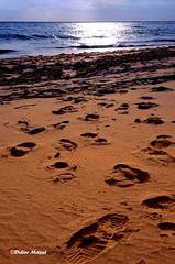 La plage, en fin de journe (didier95) Tags: mer sable plage coucherdesoleil empreintes