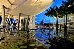 The ArtScience Museum and the Lily Pond (Rebecca Ang) Tags: lighting morning blue light urban flower reflection water pool architecture modern marina reflections flyer singapore cityscape lotus contemporary calm bluehour lilypond thebluehour marinabay urbanarchitecture singaporeflyer marinabaysands marinabayarea morningbluehour rebeccaang artsciencemuseum