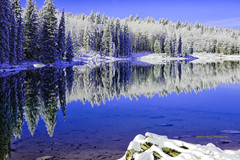 Stillness (Aspenbreeze) Tags: winter mountain lake reflection water pond colorado frost hoarfrost waterreflection grandmesa wintermountains grandmesacolorado flockedtrees bestcapturesaoi aspenbreeze elitegalleryaoi rememberthatmomentlevel4 rememberthatmomentlevel1 rememberthatmomentlevel2 rememberthatmomentlevel3 rememberthatmomentlevel5 topphotospots tpslandscape gpsetest bevzuerlein besteverdigitalphotography