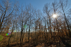 Winter Sun (Rodger Coleman) Tags: park trees sky sun tennessee flare ghosts kingstonsprings nikond7000