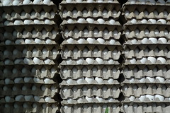 Eggs - Antigua, Guatemala (John Meckley) Tags: white pattern guatemala egg collection antigua eggs carton