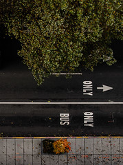 on high (dotintime) Tags: above street bus tree up painting down foliage sidewalk directions arrows instructions below meganlane dotintime