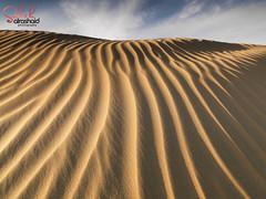 Kuwait - Alsalmi Sand Dunes ( Saleh AlRashaid / www.Salehphotography.net) Tags: light photography dunes 28mm shapes hasselblad filter lee medium format ripples kuwait  saleh    hcd   alsalmi alrashaid h4d31 desert