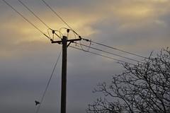 Wires (Chris Mullineux) Tags: trees sunset nikon pole wires electricity oxfordshire cassington d90 nikond90 mullineux chrismullineux