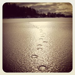 Winter tracking. #traversecity #tvc #michigan  #puremichigan #ice #tracks #frozenlake #lake #upnorth #deer (bryan elkus) Tags: square squareformat earlybird iphoneography instagramapp uploaded:by=instagram