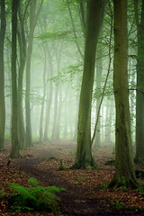 Friston Forest (Alan MacKenzie) Tags: trees mist fog mystery forest woodland dark sussex woods fristonforest