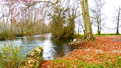 Deux platanes au bord de la Charente - Taizé-Aizie - Charente - Poitou-Charentes - France (vanaspati1) Tags: france nature water river eau rivière arbres paysage arbre charente platanes poitoucharentes vanaspati1