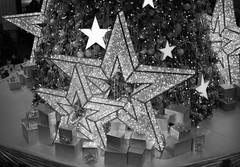 007_edited-2 (courtneyureel) Tags: christmas holiday chicago tree lights december macys statestreet 2012 walnutroom