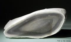 Flint (Stan Celestian) Tags: flint sedimentary chert nodule sedimentaryrocks chemicalrocks