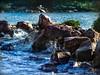 """ROCAS (gycingeniero) Tags: sea color bird nature colors rocks pelicano flickrestrellas quarzoespecial """"flickraward"""""""