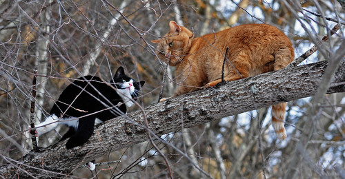 Kitties in a tree!!!!